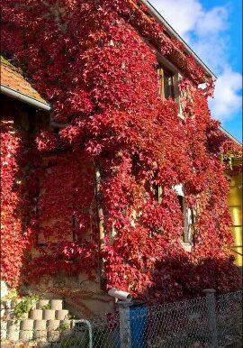 ext automne (1)