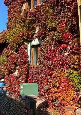 ext automne (2)
